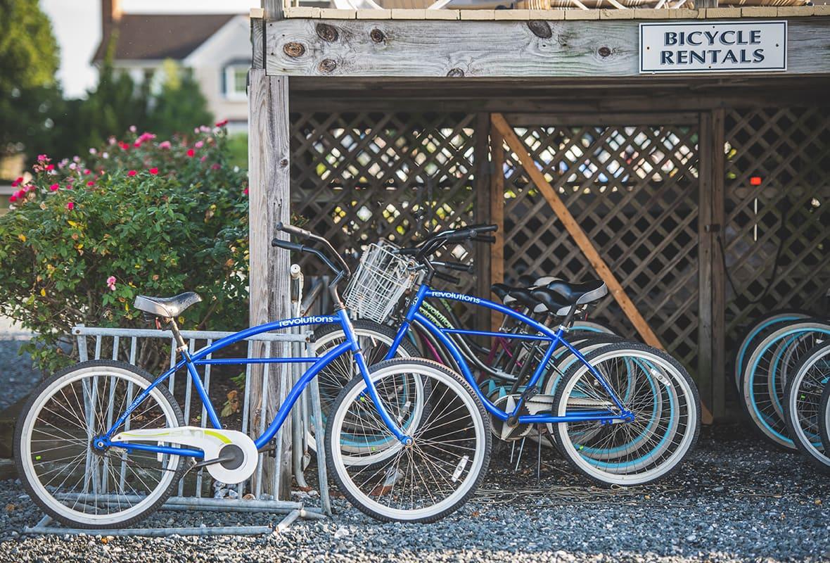 Bikes at bike rental area
